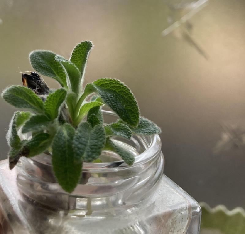 育てて、感じる。植物の生命力