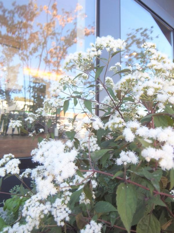 秋の花と蝶々